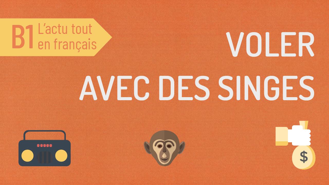 L'Actu tout en Français 46 : voler à l'aide des singes